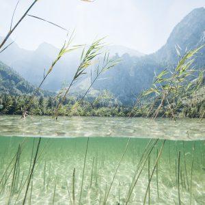 Das Bild zeigt einen oberösterreichischen See mit Schilf über und unter Wasser sowie Berge im Hintergrund.